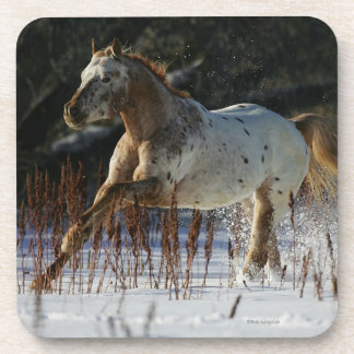 Appaloosa Horse Running in the Snow Beverage Coaster