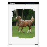 Appaloosa Horse Running iPad 3 Skins