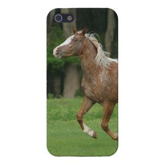 Appaloosa Horse Running iPhone SE/5/5s Case