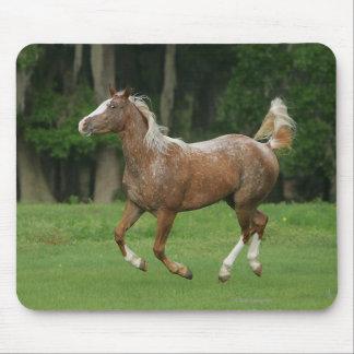 Appaloosa Horse Running Mouse Pad