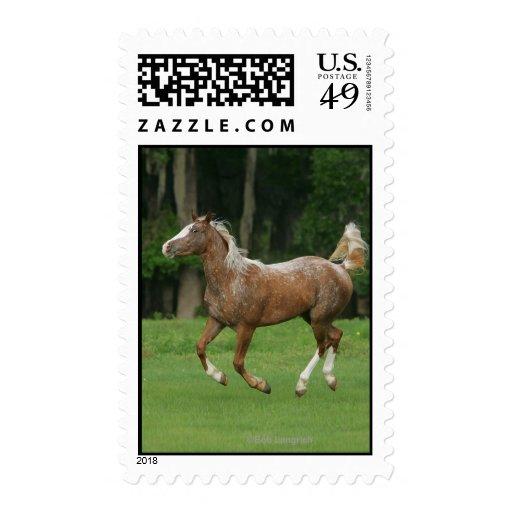 Appaloosa Horse Running Stamp