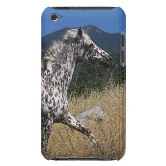Appaloosa Horse Running up Mountain iPod Touch Cover