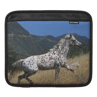 Appaloosa Horse Running up Mountain Sleeve For iPads