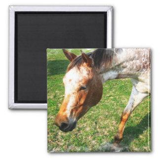 Appaloosa Horse Square Magnet Magnet