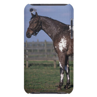 Appaloosa Horse Standing Barely There iPod Covers