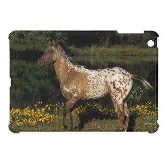 Appaloosa Horse Standing by Lake iPad Mini Cover