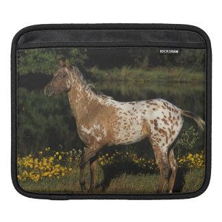 Appaloosa Horse Standing by Lake iPad Sleeve