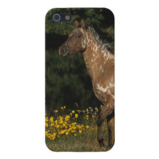 Appaloosa Horse Standing by Lake iPhone SE/5/5s Case