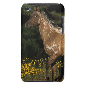 Appaloosa Horse Standing by Lake iPod Touch Cases