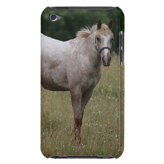 Appaloosa Horse Standing in the Grass Case-Mate iPod Touch Case