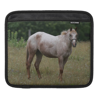 Appaloosa Horse Standing in the Grass iPad Sleeve
