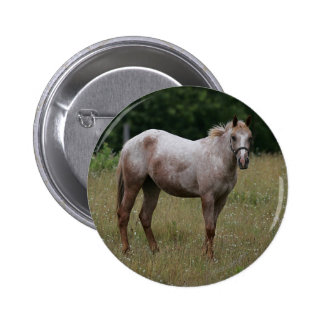Appaloosa Horse Standing in the Grass Pinback Button