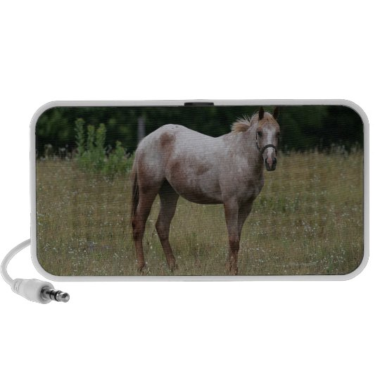 Appaloosa Horse Standing in the Grass Portable Speaker