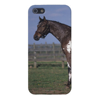 Appaloosa Horse Standing iPhone SE/5/5s Cover