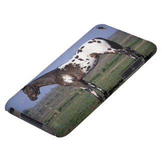 Appaloosa Horse Standing iPod Touch Covers