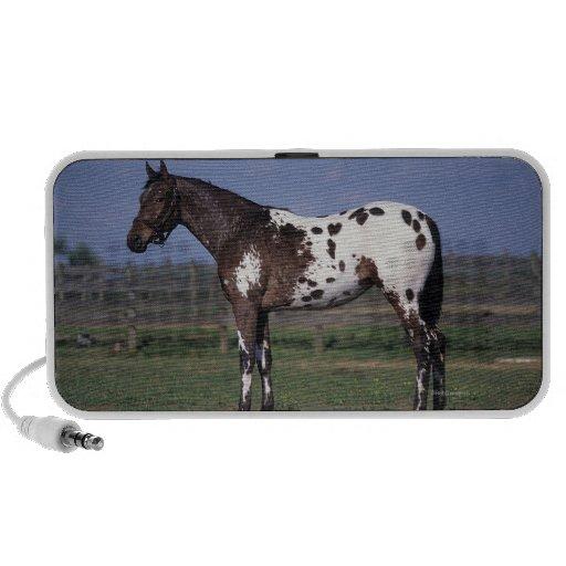 Appaloosa Horse Standing Mini Speaker
