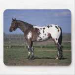 Appaloosa Horse Standing Mouse Pad