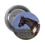 Appaloosa Horse Standing Pinback Button