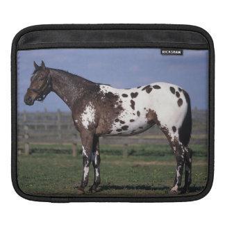 Appaloosa Horse Standing Sleeve For iPads