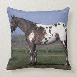 Appaloosa Horse Standing Throw Pillow