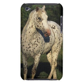 Appaloosa Horses Barely There iPod Covers