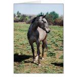 Appaloosa horses cards
