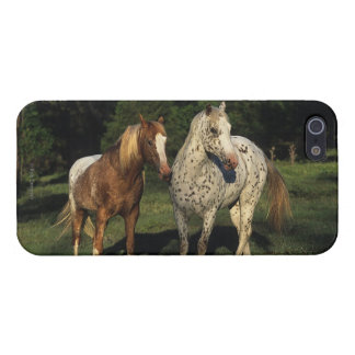 Appaloosa Horses Case For iPhone SE/5/5s