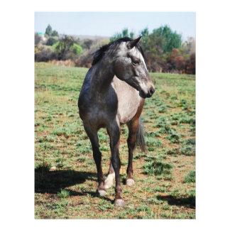 Appaloosa horses flyer