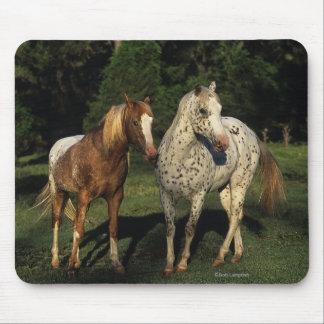 Appaloosa Horses Mouse Pad