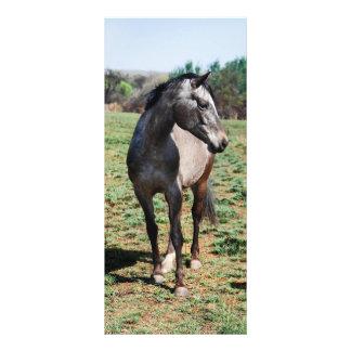 Appaloosa horses rack card