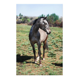 Appaloosa horses stationery