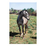 Appaloosa horses stationery paper