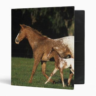 Appaloosa Mare And Foal Binder