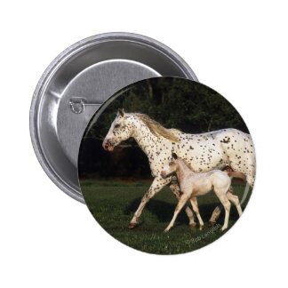 Appaloosa Mare And Foal in Field Button