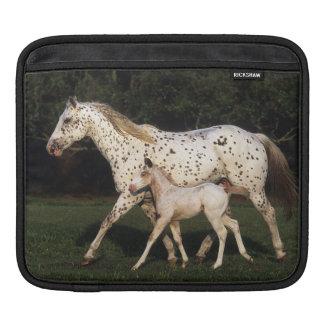 Appaloosa Mare And Foal in Field iPad Sleeve
