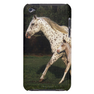 Appaloosa Mare And Foal in Field iPod Touch Cover