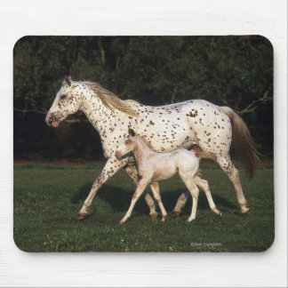 Appaloosa Mare And Foal in Field Mouse Pad