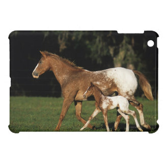 Appaloosa Mare And Foal iPad Mini Covers