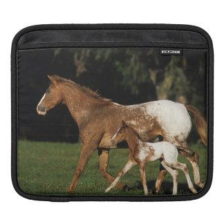 Appaloosa Mare And Foal iPad Sleeve