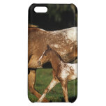 Appaloosa Mare And Foal iPhone 5C Cover