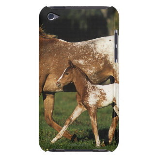 Appaloosa Mare And Foal iPod Touch Cover