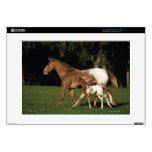 Appaloosa Mare And Foal Laptop Decal