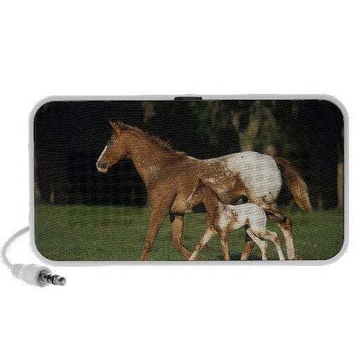 Appaloosa Mare And Foal Mini Speaker