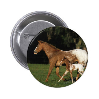 Appaloosa Mare And Foal Pinback Button