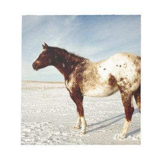 Appaloosa mare in winter notepad