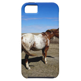 Appaloosa mare on the Canadian Prairie iPhone SE/5/5s Case