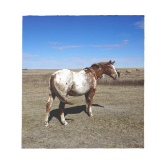 Appaloosa mare on the Canadian Prairie Notepad