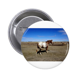 Appaloosa mare on the Canadian Prairie Pinback Button