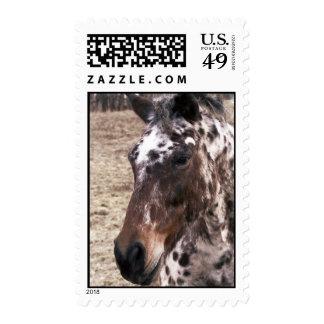 Appaloosa Stallion Postage Stamp