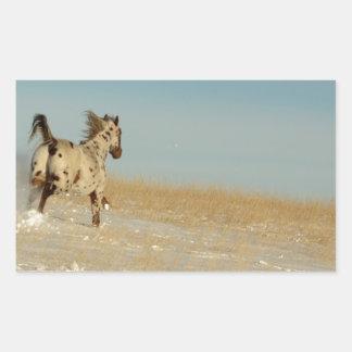 Appaloosa stallion Running Free Rectangular Sticker